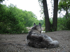 Lulu Looking Out at the Lake at Wallworth Park (sameold2010) Tags: park new dog pet newjersey spring husky lulu nj siberianhusky jersey siberian haddonfield 2013 wallworth wallworthpark wallworthlake