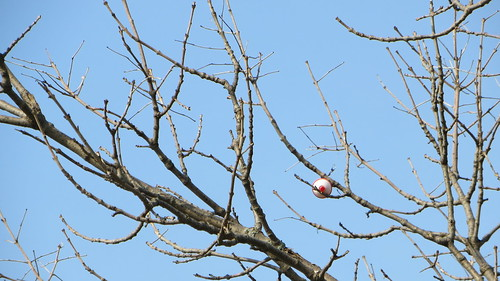someones bobber stuck in a tree at turtlehead lake. may 2013