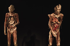 ,    . (totsamiykotoriy) Tags: muscles blood heart skin body chest medical anatomy bones inside liver organs vessels nerves