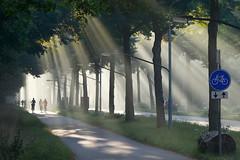Ochtendstralen (zsnajorrah) Tags: shadow people urban haarlem netherlands sign fog day explore transportation crepuscularrays haarlemmerhout efs1785mm eos600d
