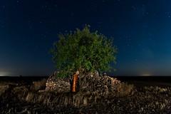 My house, my tree (Explore) (raul_lg) Tags: longexposure sky tree bulb night canon stars cielo estrellas nocturna refugio arbo cuco bombo albacete castillalamancha linterna mark3 largaexposicion contaminacionluminica raullopez iluminaicon canon5dmarkiii raullg
