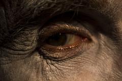 #15 Eye
