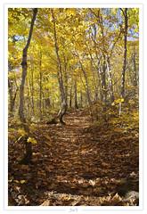 Parc National Du Bic, Quebec (-Joe'S-) Tags: autumn canada tree forest canon landscape leaf quebec paysage foret arbre parc 1740mm feuille 5dmarkii