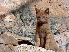 Кошка на рыбалке