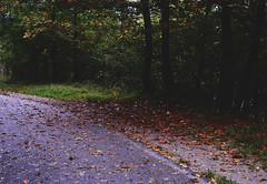si sta come d'autunno (Juliet H.) Tags: new autumn trees light brown cold verde fall love me nature beautiful beauty leaves foglie alberi clouds forest lights amazing nikon colorful quiet afternoon picture natura breathe terra per autunno colori freddo everywhere cadute ascoltare rosse respiro secche arancioni spogli