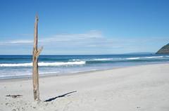 Reanimated driftwood - Dunedin (D_ncan) Tags: newzealand beach pacific nz otago dunedin