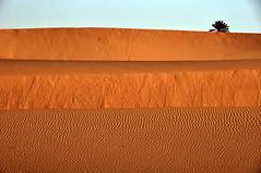 Tres dunas y una palmera. (Victoria.....a secas.) Tags: desert dunes explore palmtree desierto marruecos palmera dunas shara