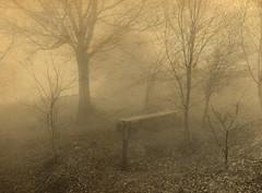 magic forest 18 (lotti roberto) Tags: apuane gabberi fog nebbia wood foresta forest alberi tree fav25 fav50 fav75