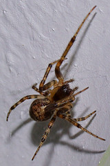 Spider2 (Garry Blackburn) Tags: macro insect spider
