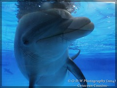 Dolphin Interaction (G.L. Photography) Tags: dolphin cote marineland interation dazur