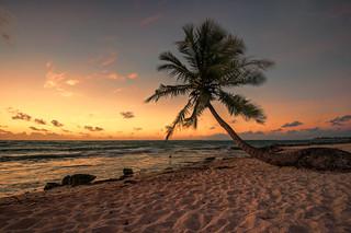 Palm Tree on Akumal Beach, Mexico