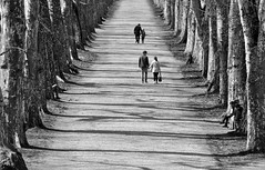 Platanenallee Tbingen (Signore Aceto) Tags: street trees bw germany blackwhite alley parkway sw avenue tuebingen allee tbingen tubingen badenwrttemberg platanenallee
