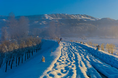 (zhouyousifang) Tags: china winter snow  yunnan  cameraman 2014     blackneckedcrane