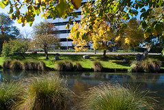 Yellow and Green (Jocey K) Tags: autumn trees newzealand christchurch water leaves buildings reflections river cbd avon avonriver