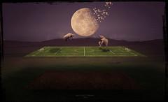 * Animal Football * (Bi Vit Trung) Tags: viet trung bui