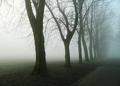 Victoria Park Glasgow (Michelle O'Connell Photography) Tags: park uk morning trees winter mist cold weather fog scotland victoriapark unitedkingdom glasgow entrance courts westend broomhill ecosse scotstoun jordanhill whiteinch victoriaparkglasgow michelleoconnellphotography