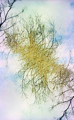 (auspices) Tags: west film nature 35mm soup lca xpro lomography birmingham exposure cross double process midlands