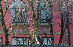 DSC_1412 (adrizufe) Tags: trees muro wall cat nikon arboles gato bizkaia durango deperfil durangaldea nikonstunninggallery musikaeskola d7000 adrizufe