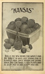 n37_w1150 (BioDivLibrary) Tags: fruit strawberries maryland kansas salisbury catalogs nurserystock nurserieshorticulture bhl:page=43881351 dc:identifier=httpbiodiversitylibraryorgpage43881351 usdepartmentofagriculturenationalagriculturallibrary bhlgardenstories allencosalisburymd bhlinbloom