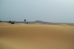 SDIM0789 (afuromegane) Tags: africa brown sahara nature beautiful yellow sand desert sigma morocco quattro dp2