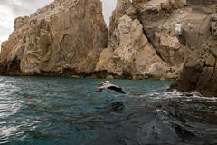 ARBT_BirdInFlight (addddee) Tags: ocean trip travel blue sea bird 35mm mexico cabo rocks fuji mexican fujifilm 35 cabosanlucas rockformation fixedlens mirrorless 35mmeq 35mmequivalent fujifilmx100t fujix100t 35eq