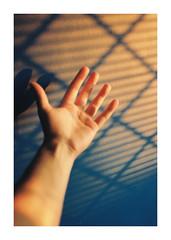 (FudgeDaniels) Tags: light shadow portrait sunlight texture home composition analog 35mm glow shadows hand arm kodak room details fingers 35mmfilm frame form shape left tones tone goldenhour t2 35mmphotography contaxt2 northwales portra400 kodakportra400 kodakportra imstillhere democraticforest atwarwiththeobvious