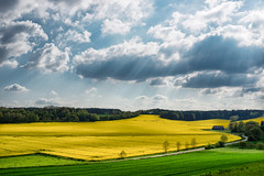 Bavarian Raps-ody (2) (Karsten Gieselmann) Tags: blue sun color yellow clouds spring lawn meadow wolken olympus gelb blau sonne farbe frhling m43 mft microfourthirds feldweidewiese em5markii kgiesel