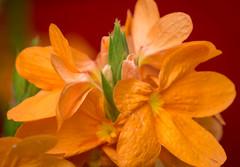Orange burst (sydbad) Tags: orange zeiss 35mm sony burst f28 ilce6000