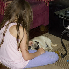 Sleepy Time (Deep-Fried Goodness) Tags: dog cute pug dexter