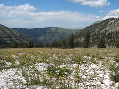 Descending Upper Darby Canyon via the Meadow Route (Anne's Travels 4) Tags: wyoming tetons grandtetonnationalpark jedediahsmithwilderness darbycanyon upperdarbycanyon