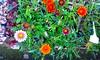 20150822_144249 (Megaolhar) Tags: flores toy flickr do dia vale paulo apa bom inverno são campos facebook tuka jordão paraíba fazendinha 2016 youtube ibama twitter jardinagem bioma gomeral