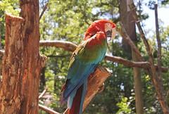 Catoctin Zoo ~ beautiful Macaw - HTT & HBW! (karma (Karen)) Tags: birds maryland textures brightcolors zoos macaws thurmont htt hbw frederickco catoctinzoo cmwd