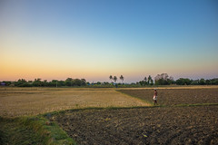 Farmer's paradise. (nshrishikesh) Tags: street travel sunset india colors canon photography flickr photographer farmers weekend explorer roots streetphotography streetlife traveller explore hues photowalk chennai incredible roi cwc clickers 2016 travelphotography hrk incredibleindia koovagam canon600d rootsofindia chennaiweekendclickers hrishikeshphotography