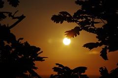 Woodland frame (Sundornvic) Tags: trees light sunset sky sun silhouette woods shine shropshire hill haughmond