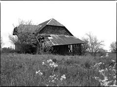 this old house... (Sandro Reinhard) Tags: bw mamiya film analog haus 6x45 frhling mittelformat m645 uebeschi