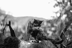 Wartimes (Mason Aldridge) Tags: trees summer portrait dog cats canada cute forest cat portraits canon puppy 50mm spring kitten dof bc sweet bokeh walk f14 adorable kitty sunny kittens hike depthoffield trail shallow depth 6d fraservalley