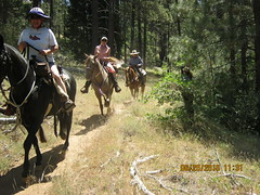 Horse riders on Chico Ravine Trail Laguna 6-26-16 b (Bob_ Perry) Tags: laguna mtlaguna mountlaguna lasgatos losgatos chicoravine lmva lmra lagunamountainrecreation clevelandnationalforest lagunamedow