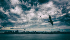 San Francisco from Alcatraz (Darren LoPrinzi) Tags: canon 5d miii sanfranciscotrip2015 sanfrancisco alcatraz birds clouds sky skyline city bay bayarea canon5d