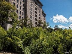 ... (Jean S..) Tags: blue windows sky white fern green stone clouds concrete fougre builging