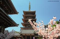 TOKYO, Asakusa pagode del tempio Senso-ji, (http://russogiuseppefotoeviaggi.wordpress.com/) Tags: japan sensoji tokyo shrine asakusa viaggi hanami religione tradizioni buddismo