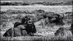 _SG_2016_05_Namibia_0208_1_IMG_1238 (_SG_) Tags: auto africa park trip elephant tree water car nationalpark wasser solitude desert hole national afrika giraffe ausflug elefant namibia herd baum strauch etosha gnus wildebeest watering wateringhole elefanten 2016 einde giraffen antilopen herde etoshanationalpark standpost wasserstelle etoshapark elefantenherde wildebai giraffenherde giraffesherd