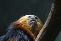 National Zoo  (1299) (smata2) Tags: zoo nationscapital smithsoniannationalzoo itsazoooutthere zoosofnorthamerica