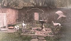 Dreamy garden (monikaforman) Tags: tlc cosmopolitan anc kalopsia applefall trompeloeil vespertine hpmd wereclosed