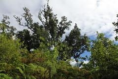 Raoul Island (cathm2) Tags: newzealand kermadecs raoul island nature tress green travel