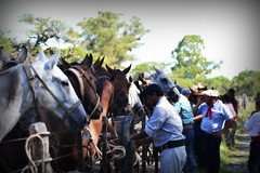 La maroma (Eduardo Amorim) Tags: horses horse southamerica argentina criollo caballo cheval caballos sauce cavalos corrientes pferde cavalli cavallo cavalo gauchos pferd chevaux gaucho amricadosul gacho amriquedusud  gachos  sudamrica suramrica amricadelsur sdamerika crioulo caballoscriollos criollos jineteada  americadelsud gineteada crioulos cavalocrioulo americameridionale caballocriollo eduardoamorim cavaloscrioulos provinciadecorrientes corrientesprovince cavall