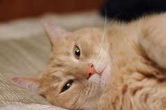 DSC_0278 (Cropshy) Tags: 50mmf14 cat