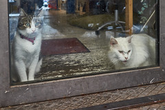 Gatti di Roma (michaelbeyer_hh) Tags: cats gattidiroma