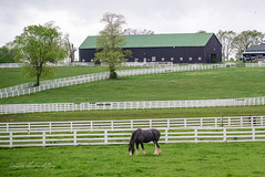 Out to Pasture (shirley319) Tags: horse barn unitedstates lexington kentucky may nationals equestrian 2016 d600 horsecompetition ihsa kentuckyhorsepark