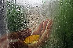 """...Into each life some rain must fall..."" - H.W. Longfellow (eggii) Tags: flower window glass rain hand doubleexposure raindrops"