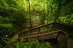 The Devil's Millhopper. (+Lonnie & Lou+) Tags: park travel trees usa green nature stairs forest canon nikon florida path sony gainesville wideangle jacksonville sinkhole a7r